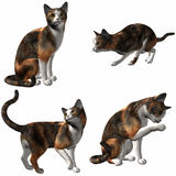 Cat-Calico Royalty Free Stock Photos