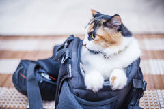 Cat in camera bag Stock Image