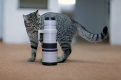 Cat and the camera lens and professional wildlife Stock Photos