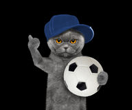 Cat in cap with a ball Royalty Free Stock Photography