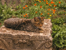 Cat on a capital stone Royalty Free Stock Photography