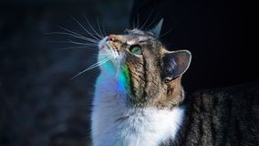 Cat portrait isolated royalty free stock image