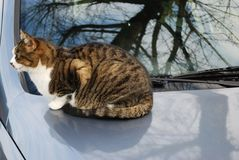 Cat on the car Royalty Free Stock Photos