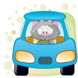 Cat in a car Stock Image