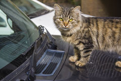 Cat on the car Royalty Free Stock Photo