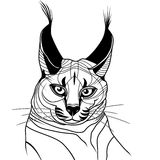 Cat caracal kitten wild animal sketch tattoo vector Royalty Free Stock Images