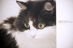 Cat card. Beautiful young cat on background Stock Photos