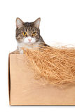 Cat in a cardboard box Royalty Free Stock Photos
