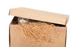 Cat in a cardboard box Royalty Free Stock Photo