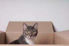 Cat in cardboard box Stock Image