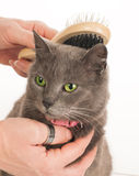 Cat care Stock Images