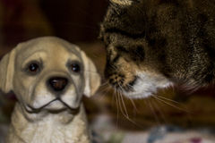 The cat carefully examines the dog. The cat carefully examines the white dog Stock Photography