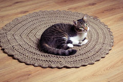 Cat on carpet. Cat on brown crochet carpet Royalty Free Stock Image