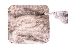 Cat on the carpet Royalty Free Stock Photos