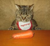 Cat and carrot royalty free stock photos