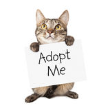 Cat Carrying Adopt Me Sign Lizenzfreies Stockfoto