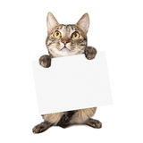Cat Carrying Blank Sign Lizenzfreies Stockfoto