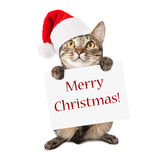 Cat Carrying Merry Christmas Sign stock photo