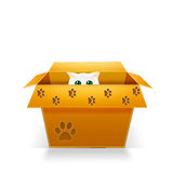 Cat in carton box. Cat in a carton box Royalty Free Stock Image