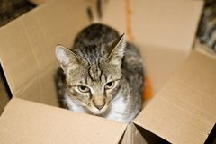Cat in carton box. Homeless cat sitting in open carton box Stock Photography