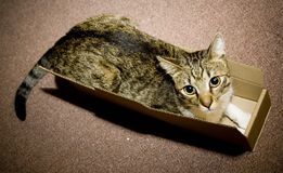 Cat in carton box. Homeless cat sitting in open carton box Royalty Free Stock Photos