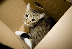 Cat in carton box. Homeless cat sitting in open carton box Royalty Free Stock Photo