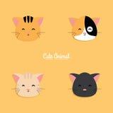 Cat cartoon faces Royalty Free Stock Image