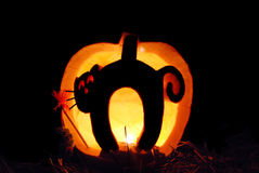 Cat carving in pumpkin Stock Photos