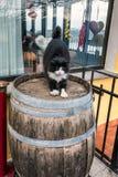 Cat Castel Gandolfo Stock Afbeeldingen