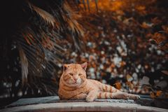 Cat. Bokeh india,  portraits are best Stock Images