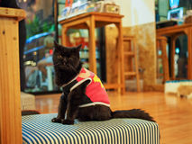 Cat in cat cafe. Cat in a cat cafe in Chiang Mai, Thailand royalty free stock photos