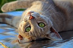 Cat, Cat Face, Cat'S Eyes Stock Photography