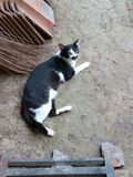 Black and white cat. Lying on the ground and looking up royalty free stock image
