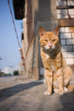 Cat in the Cat Island. Gulangyu, the small Island in sourth-east China, is also named as Cat Island.  Like the peaceful life-style there, thousands of cats have Stock Images