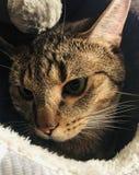CAT! stock images