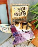 Cat, Open store stock image