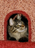 Cat in cat`s condo. Tabby cat in cat`s condo Royalty Free Stock Images