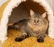 A cat in a cat`s house Royalty Free Stock Images