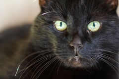 Cat / Cat's portrait. Close-up with shallow depth of field Stock Images