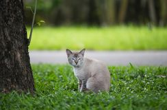 Cat Royalty Free Stock Images