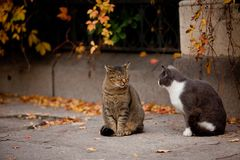 Cat and cat in the street Royalty Free Stock Image
