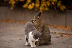 Cat and cat in the street Stock Images