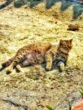 Cat cat stock images