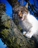 Cat. On tree Royalty Free Stock Images
