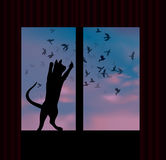 Cat catches a bird behind the window Royalty Free Stock Photo