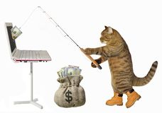 Cat catches dollars from the computer. The cat fisher catches dollars from the computer with a fishing rod. White background stock photos