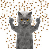Cat catches the dry food falling from above. Isolated on white background stock illustration