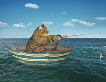 Cat fisherman on umbrella. The cat catches fish from a umbrella royalty free stock photos