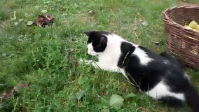 Cat catching mouse in grass