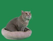 Cat in the Catnap Cutout Royalty Free Stock Photography